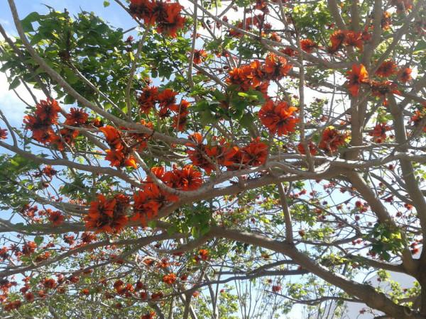 Что растет и цветет в Португалии