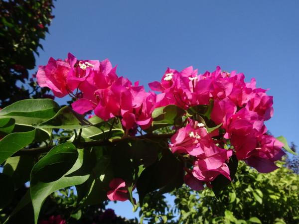 Что цветет и растет в Греции