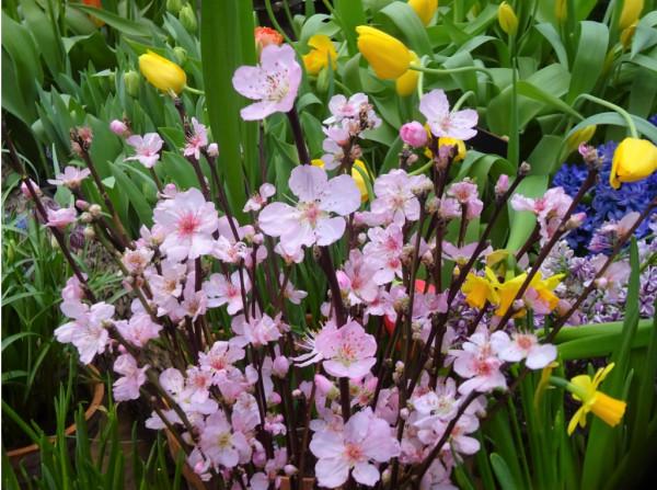 Еще весны - продлили до 13 марта!