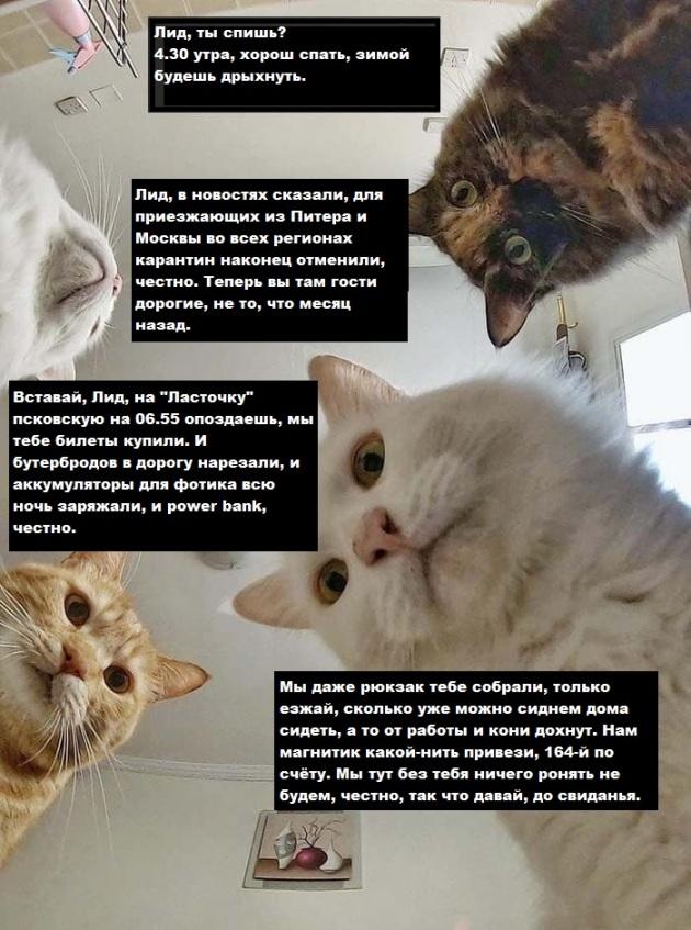 Лида и коты.jpg