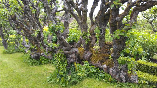5manorgardentree