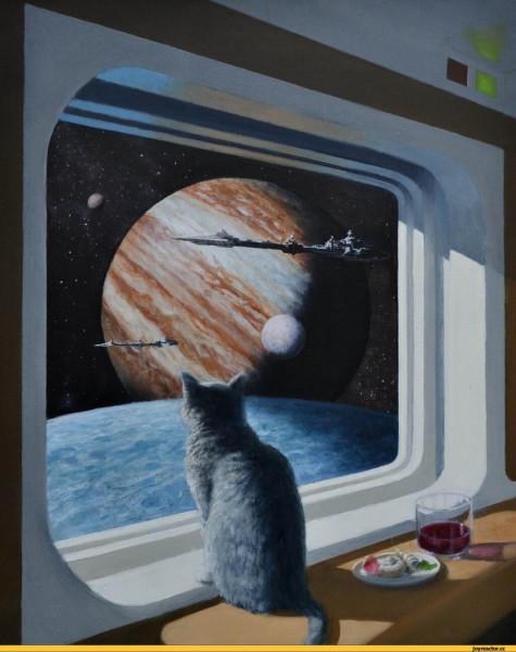 ship_cat