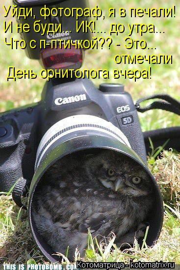 kotomatritsa_z