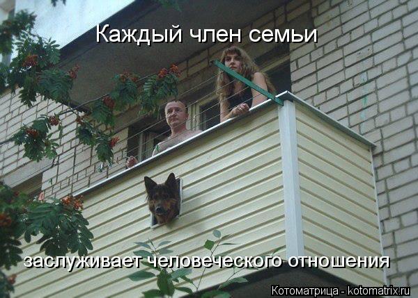 kotomatritsa_7Y