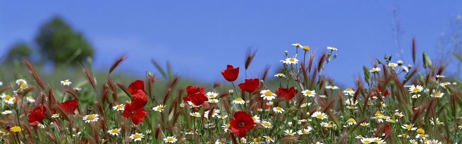 flower_55AVcTmC