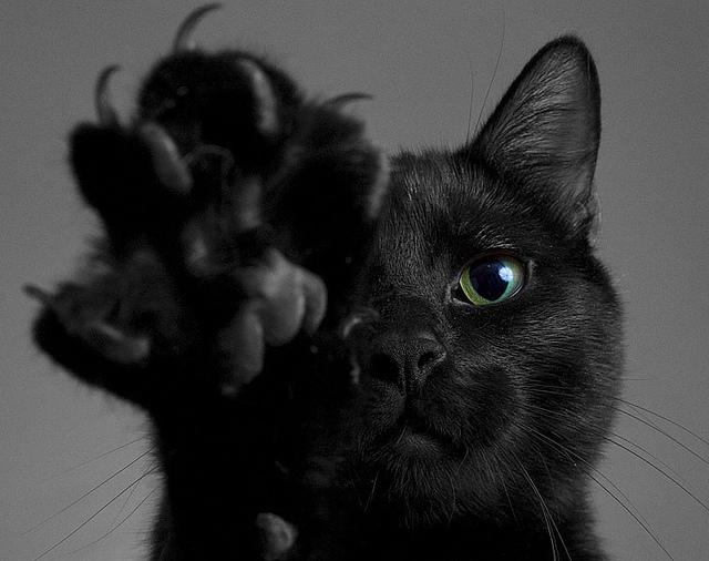 content_black_cat111