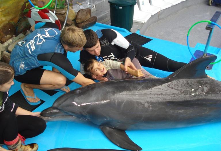 дельфины 2012-сент-2
