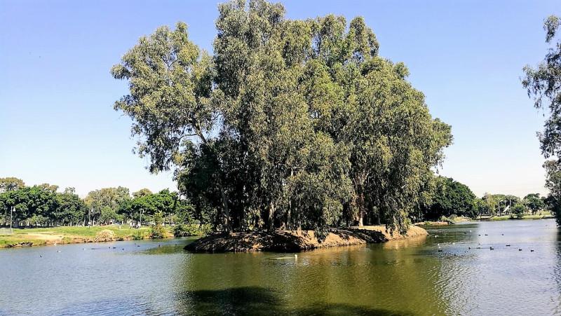 пруд в парке Леуми