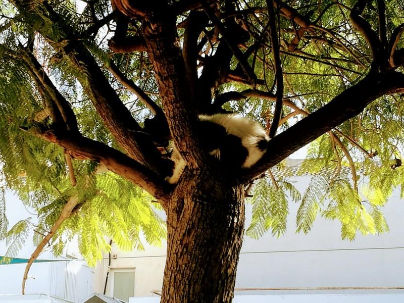 Кот спи на дереве