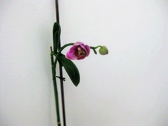 Рождение орхидеи