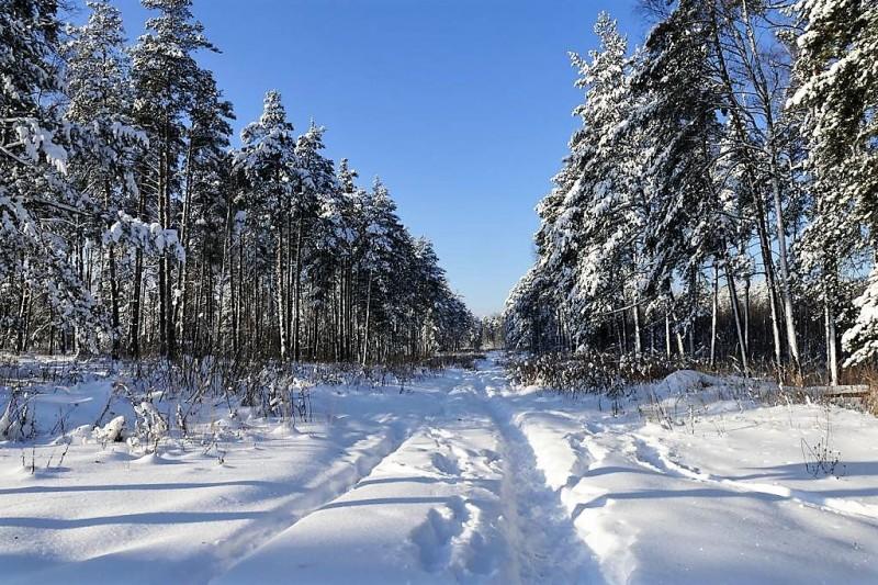 Просека в лесу. Фото Фаины Кузнецовой