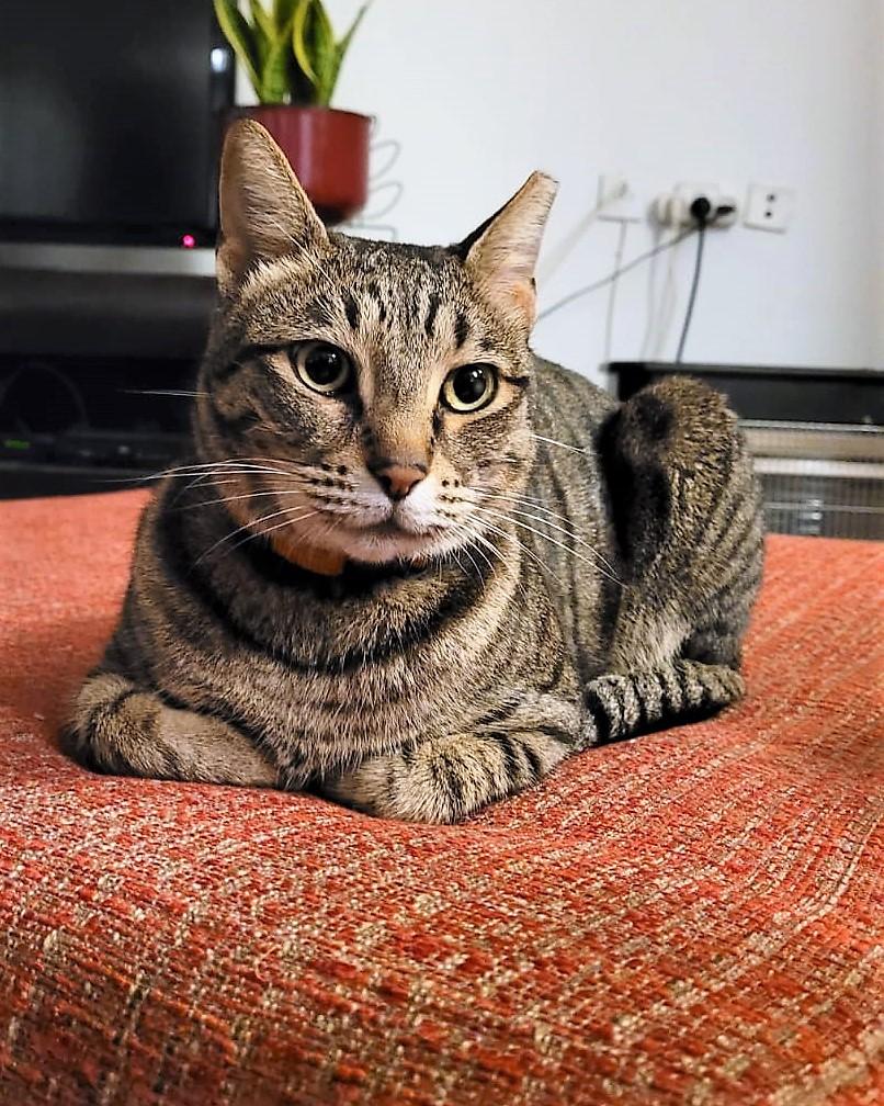 Умная  большая кошка  - мама