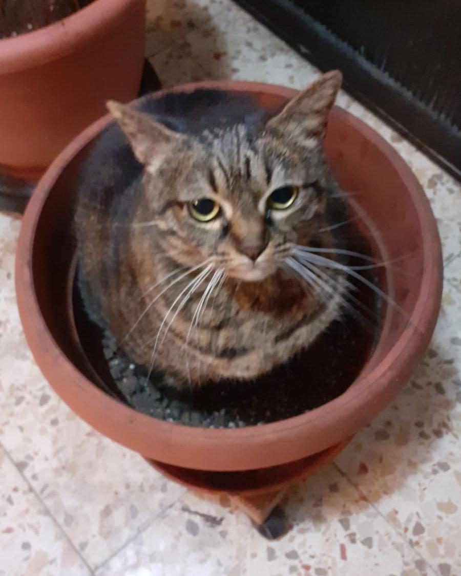 Котик в цветочном горшке