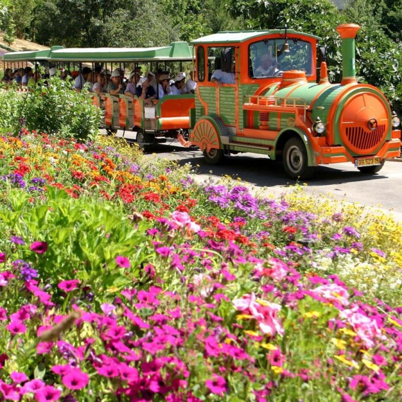 Цветение  в ботаническом саду. Фотограф Том Амит