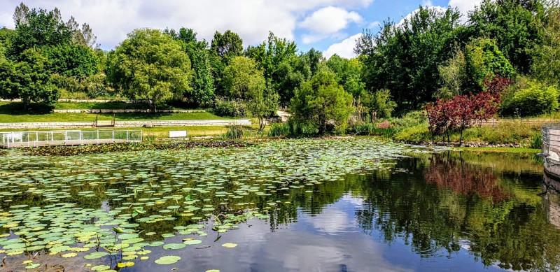 В ботаническом саду. Фотограф Том Амит
