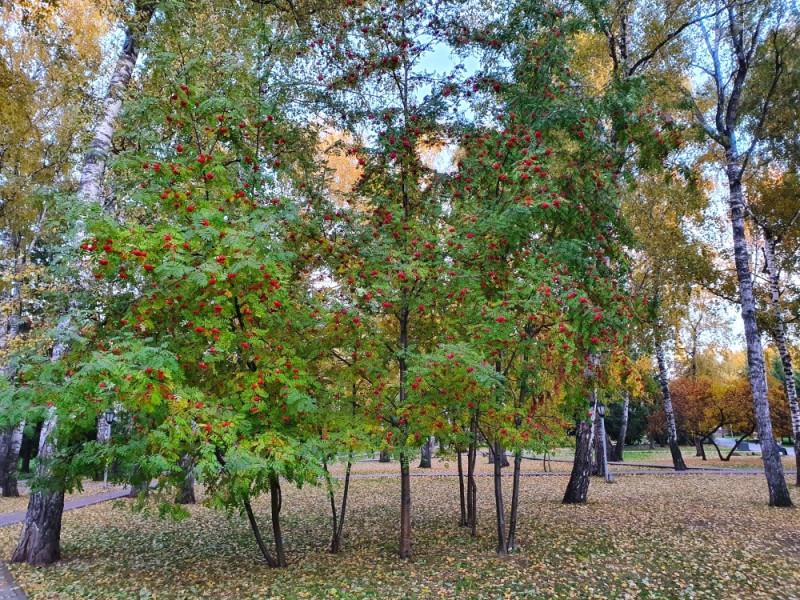 Осень в  Франтишковых лазнях