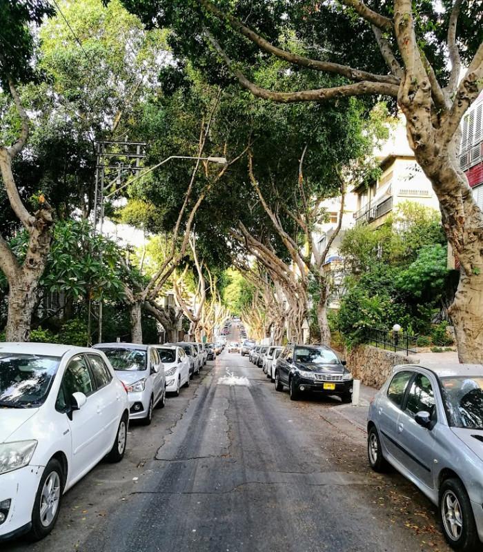 Деревья смыкаются над головой