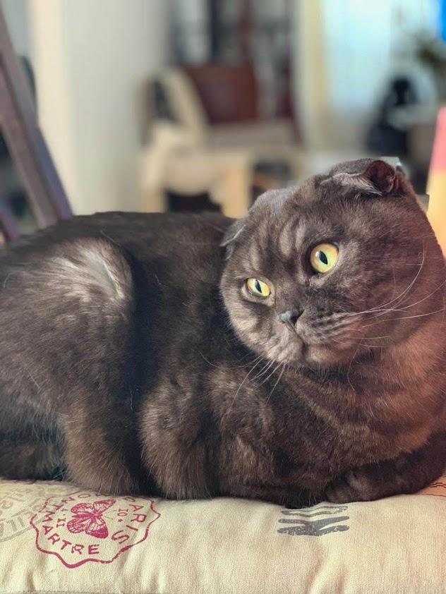 Кот Гоша как он есть