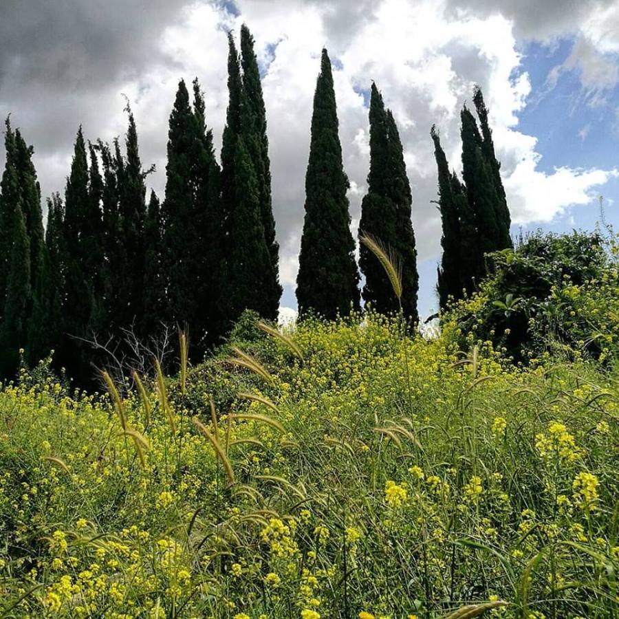 Верхняя Галилея:  пасторальная, деловая и туристическая