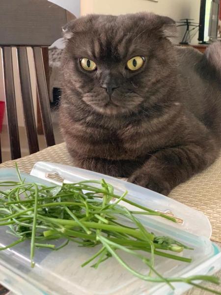 Женские штучки. Салат из петрушки и кинзы