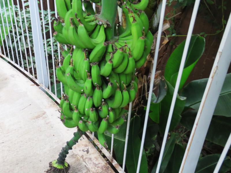 В тропической оранжерее