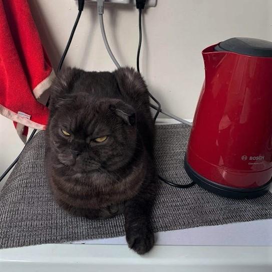 кот Гоша