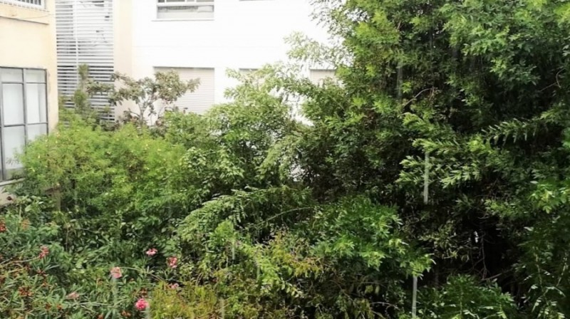 Гиватаим. Вид из моего окна