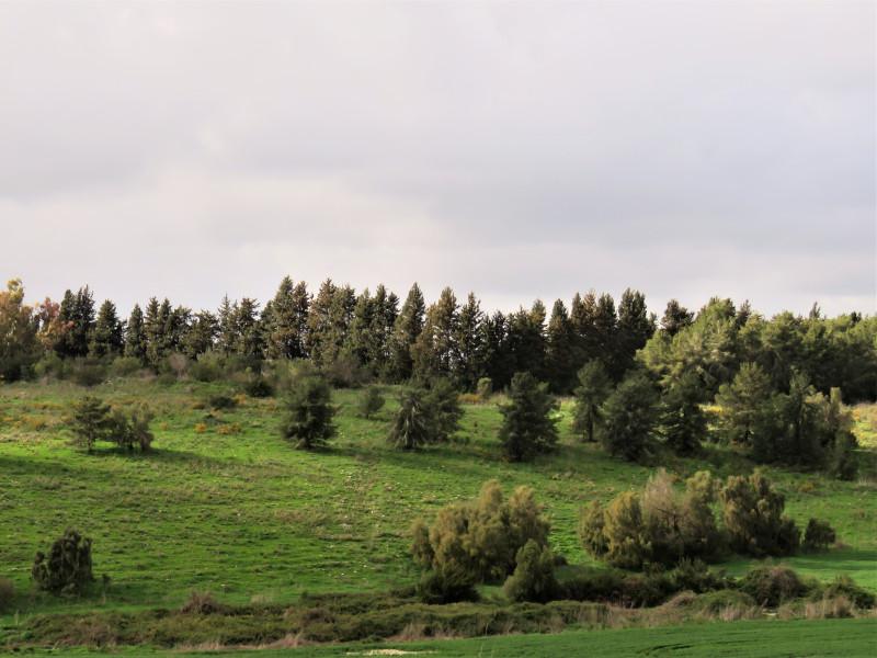 лес на закате дня