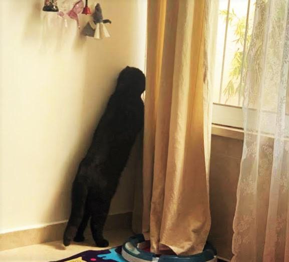 Гоша высматривает