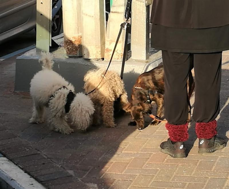 собачки с дамой