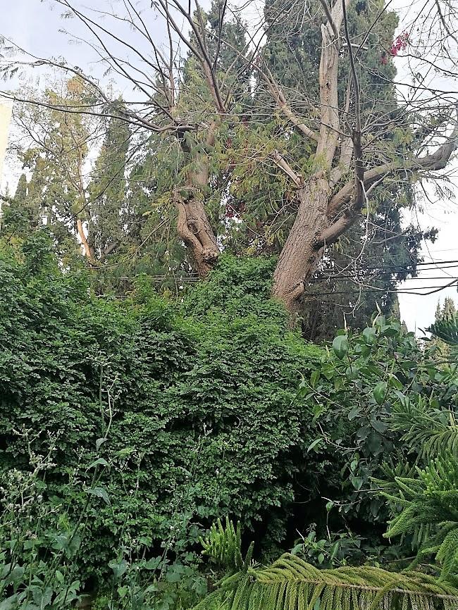 Старые, старые деревья