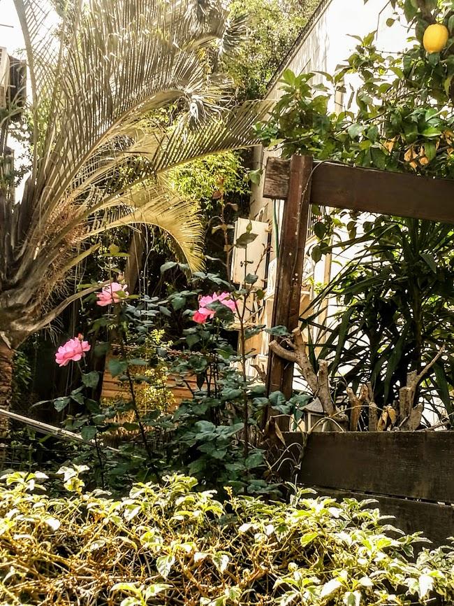 пасторальный уголок в центре Гиватаима