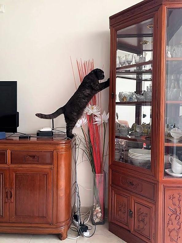 кот Гоша помогает
