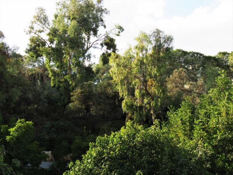 Ботанический сад в Иерусалиме