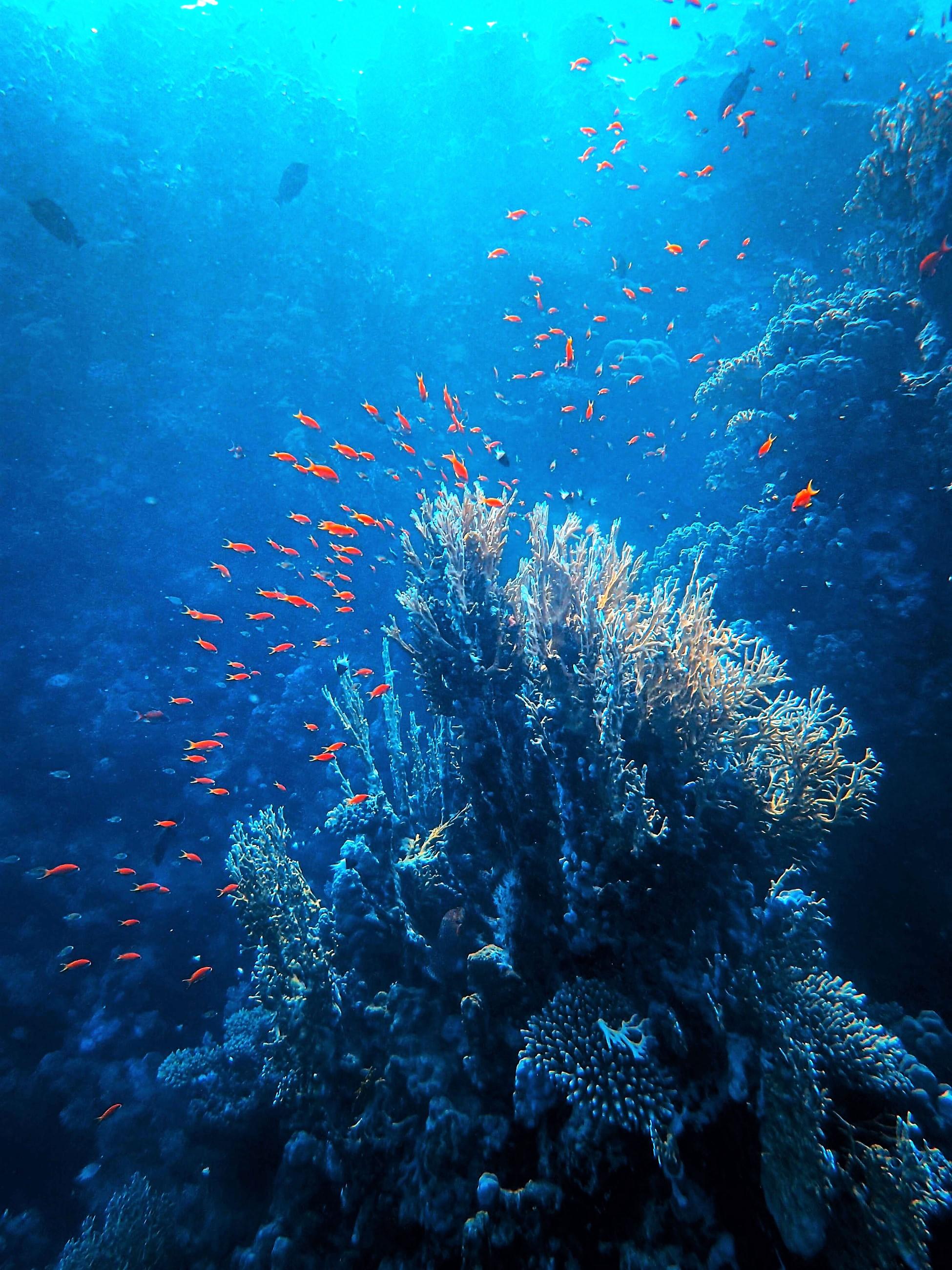 Фото Francesco Ungaro. unsplash.com