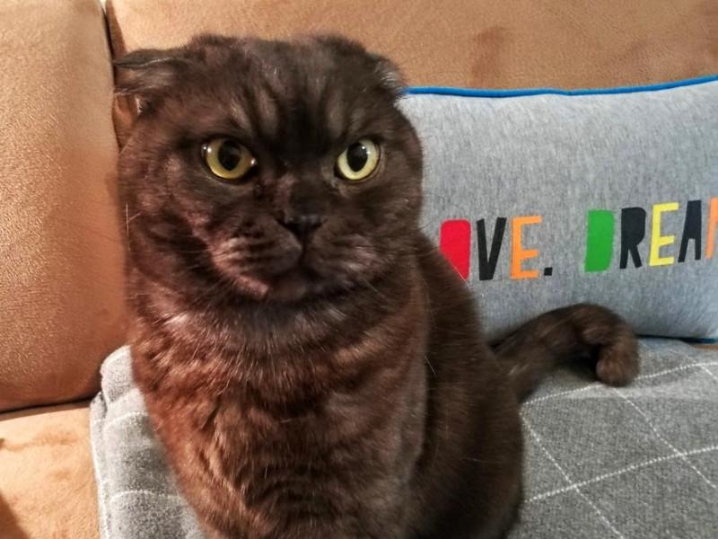 Кот Гоша хмурится