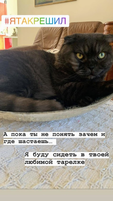 Вот суть кота Гоши