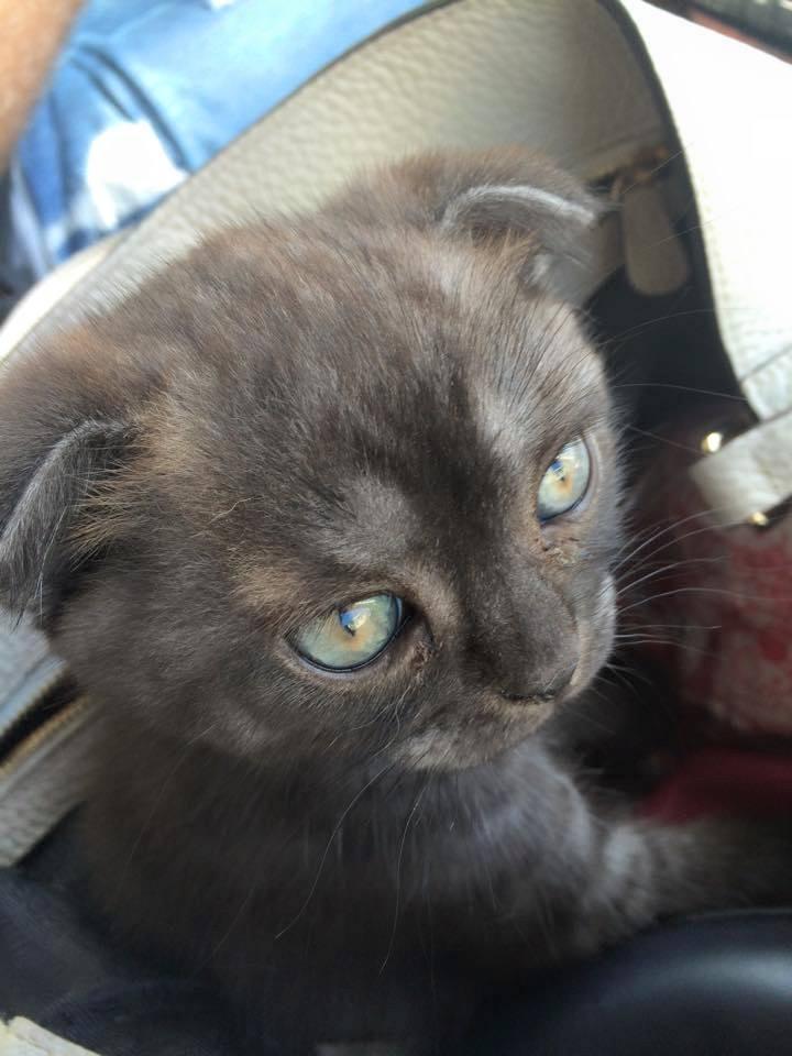 Котеночек  едет к нам. Еще без имени.