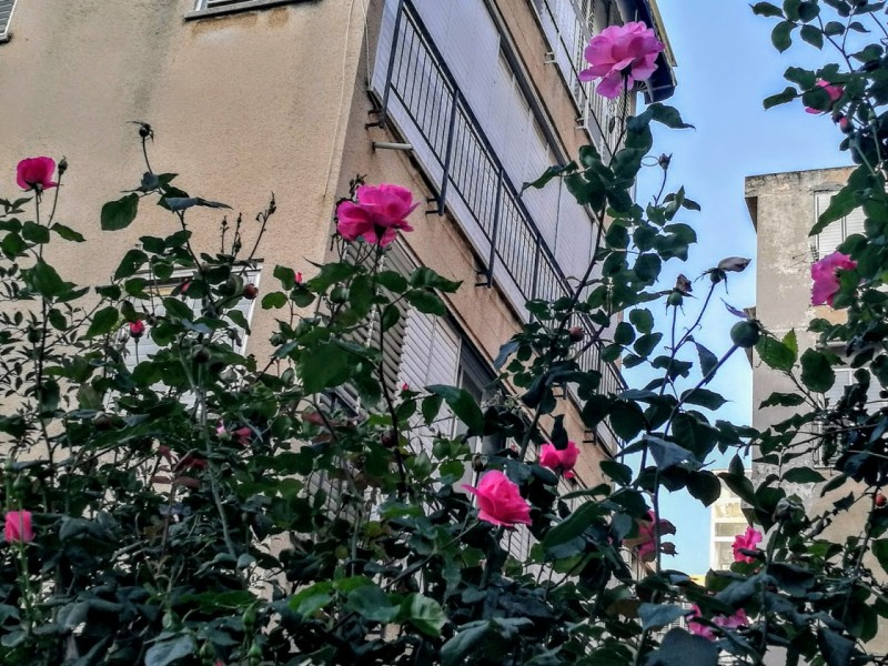 Пикник среди роз