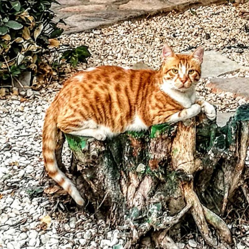 Рыжий кот на троне.