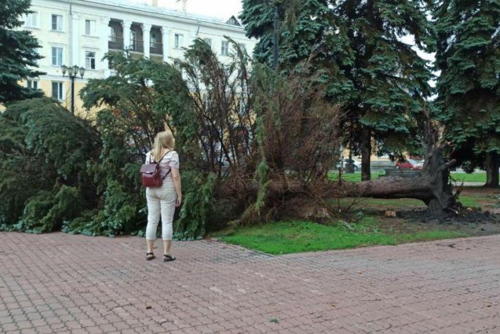 Ветер силой 25–27 м/с способен повалить не одно такое дерево. Фото: администрация Челябинска
