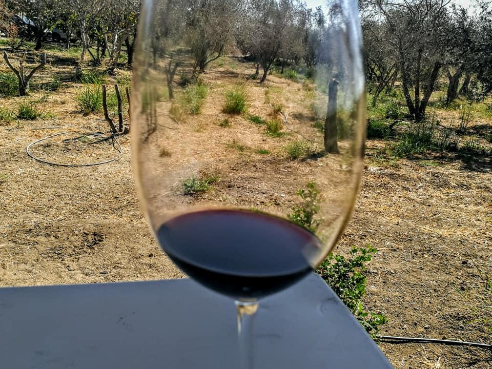 В винодельне  Galil Mountain