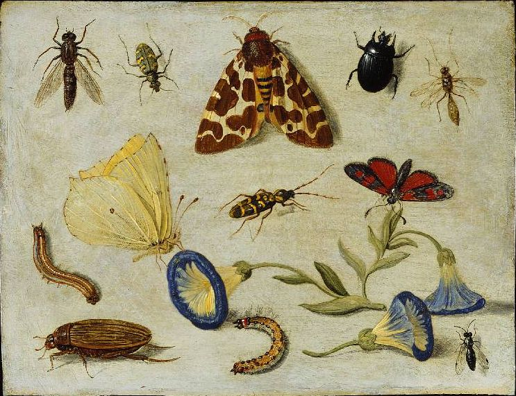 insects1
