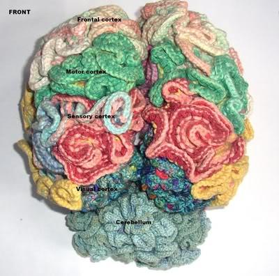 мозг3