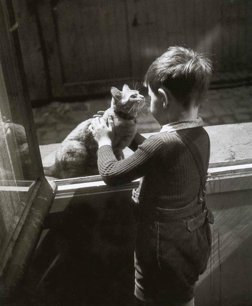 chat de la concierge. Paris, 1947.