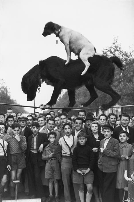 chien 1952. Bd Richard Lenoir henri cartie-bresson