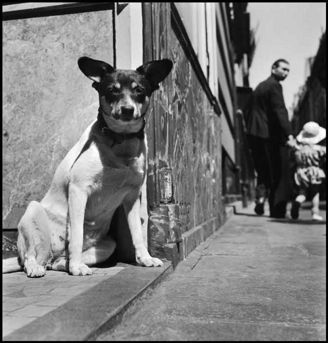 chien1949 Elliott Erwitt