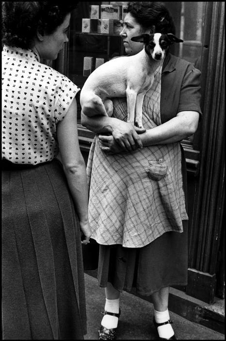 chien1952 Elliott Erwitt