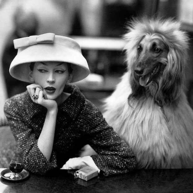 avedon-photo-fashion-dog