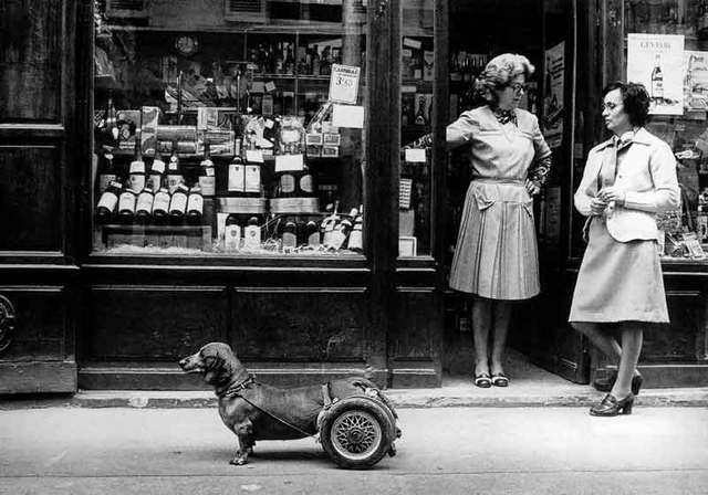 DOISNEAU-2567-Le-chien-a-roulettes-PARIS-1977